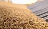 Експорт з України зернових, зернобобових та борошна