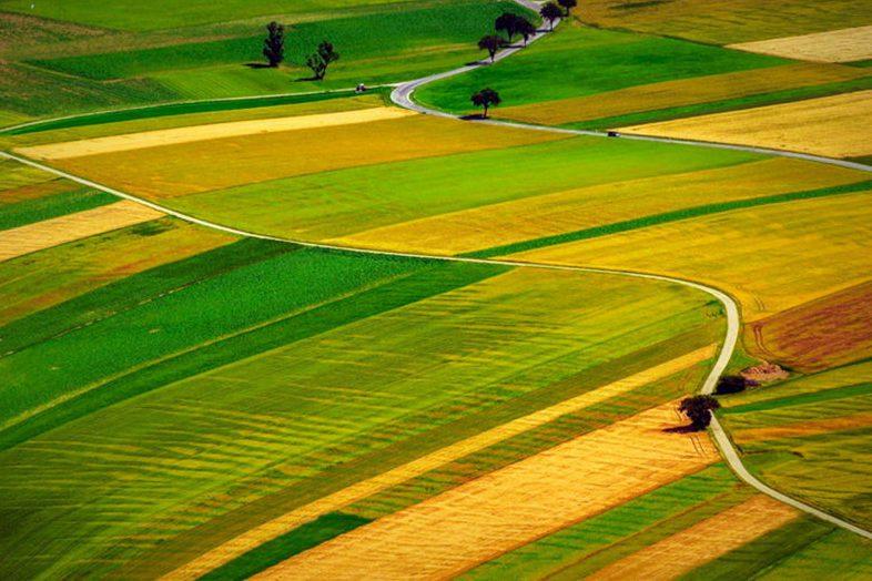 Планується створення антирейдерської комісії для захисту фермерів