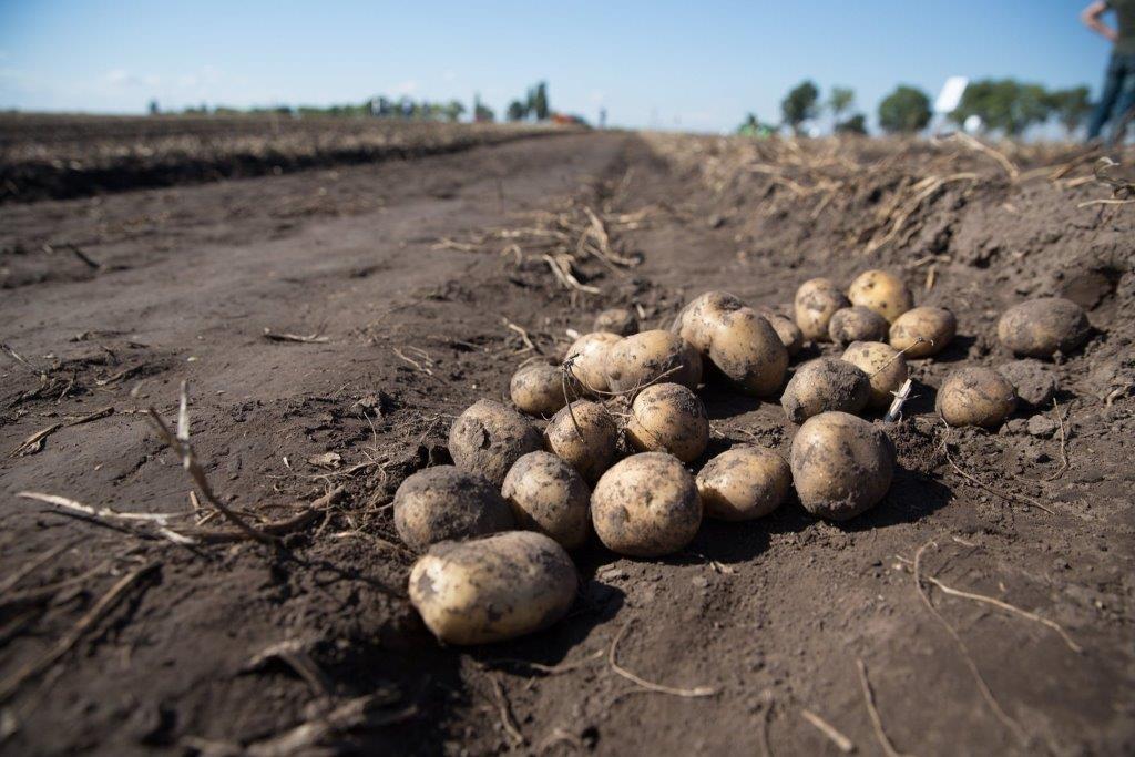 Всеукраїнський день картоплі